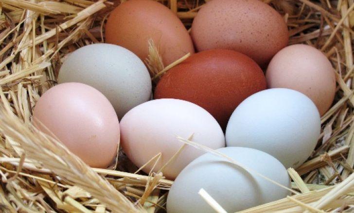 consumul de oua